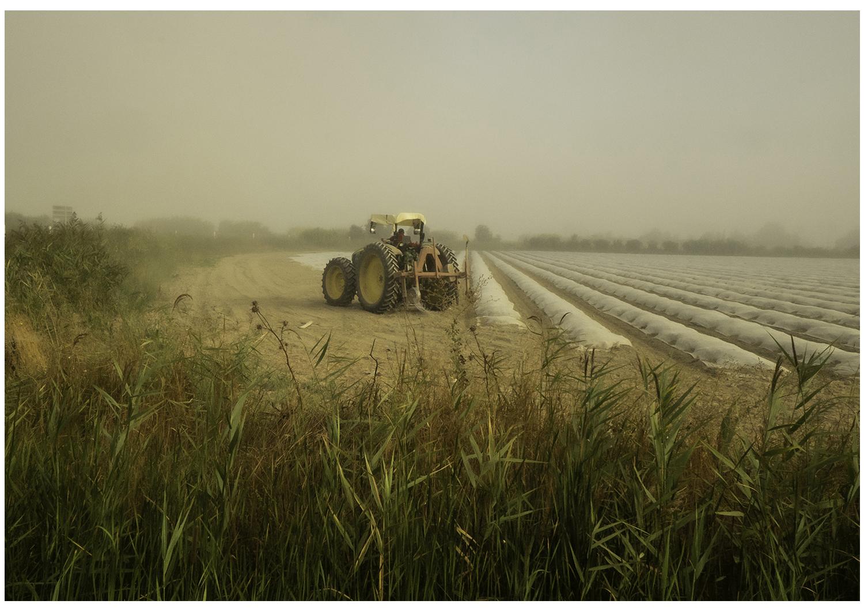 Tractor, Camargue (2020)