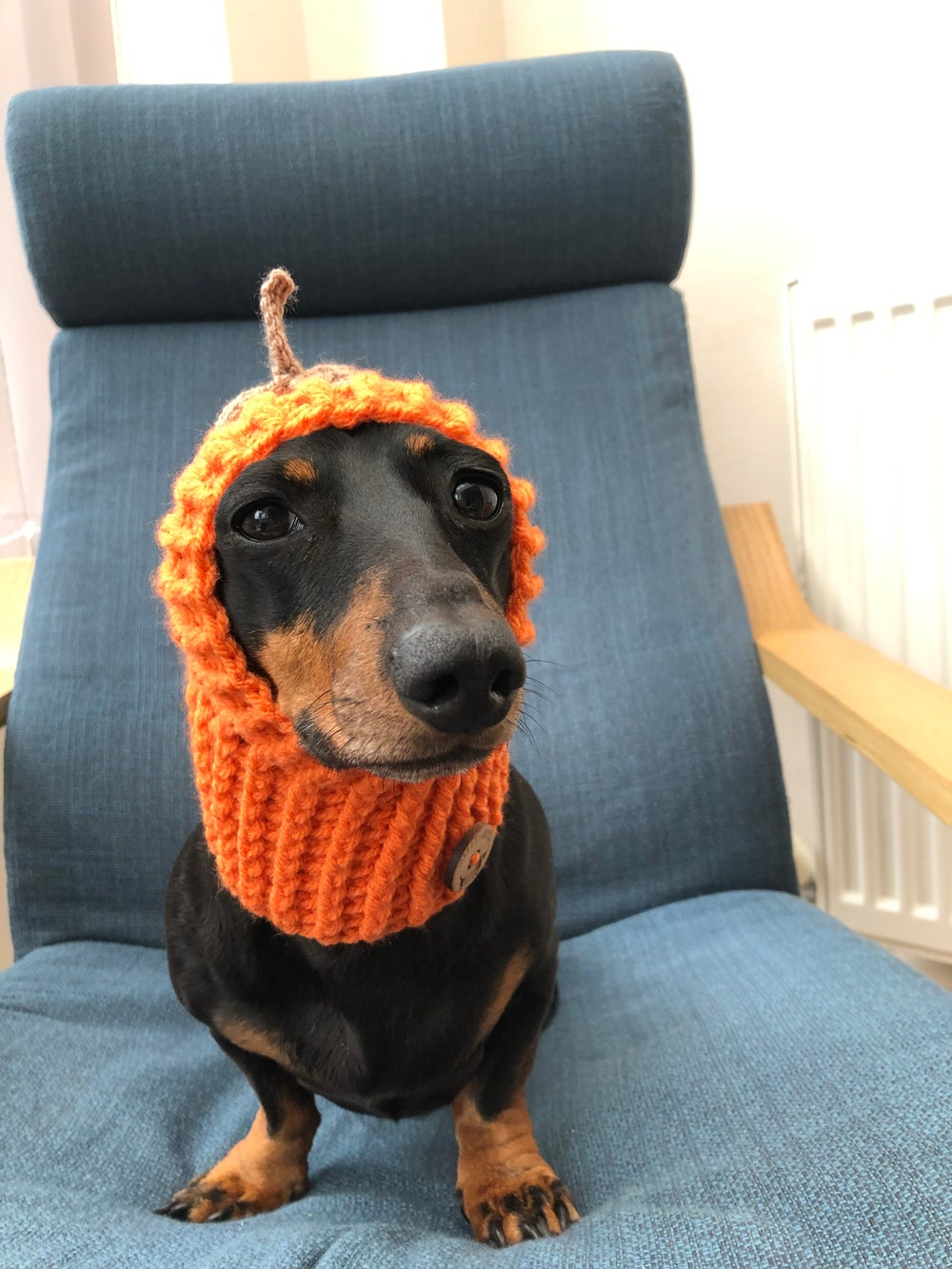 Image of Snazzy Pumpkin Snood