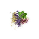Image 3 of Herb Bunch Bubble-free stickers