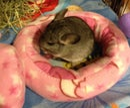 Image of DanishDonut™ Bed