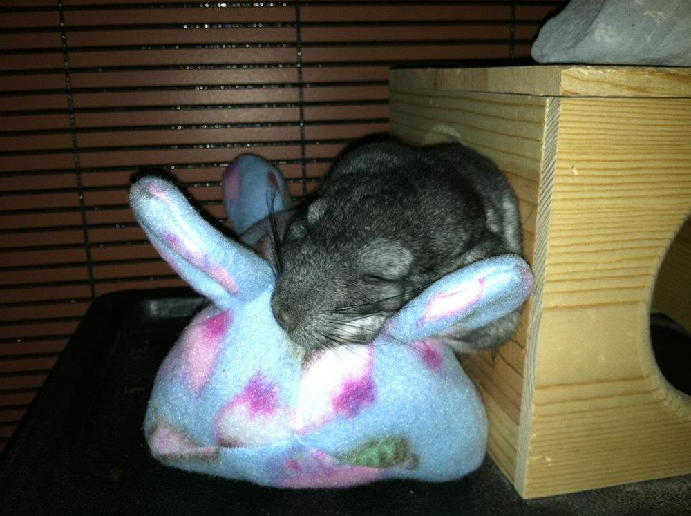 Image of Chinnie-Buddie™ for Chinchillas, Pocket Pets and others