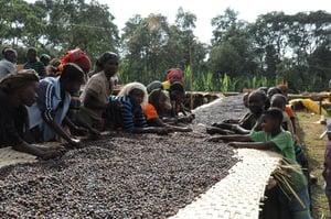 Image of Ethiopian Idido Cooperative