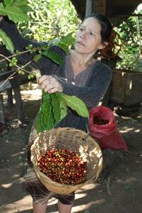 Image of Nicaraguan Vienna Roast