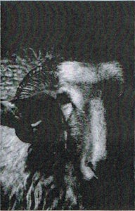Image of RAVENSDOM / THE AUSTRASIAN GOAT AND THE VNTRVE ENSEMBLE CS