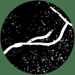 Image of White Worm