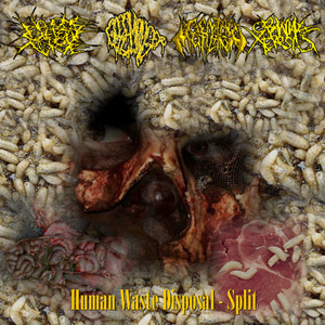 Image of Human Waste Disposal Split CD 2010