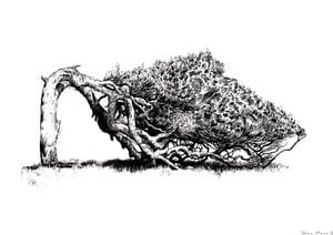 Image of Geraldton Tree Srudy