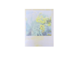 Image of SOLIDAGO