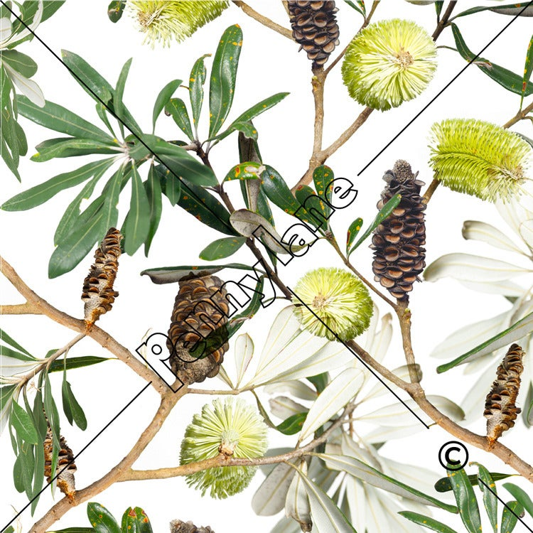 Image of Banksia