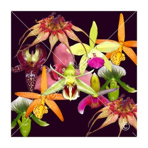 Image of Scarf - Orchids