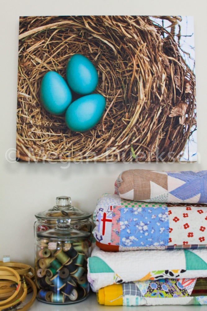 Image of Robin Eggs Canvas