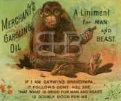 Image of Merchant's Gargling Oil - Darwin