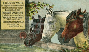 Image of Merchant's Gargling Oil - Three Horses