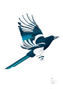 Image of Magpie in flight