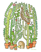 Image of Quilliam's Cactuses