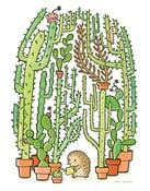 Image of Quilliam's Cactuses