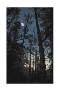 Image of Northwoods_Winter AP