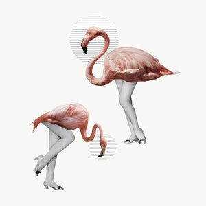 Image of the birds I