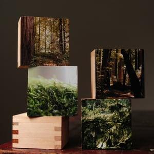 Image of Forrest.  4 blocks & Photographs