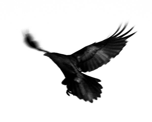 Image of Arizona Dark Bird