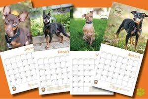 Image of Picasso's Place Min Pin Rescue 'Pin-Up' 2014 Calendar