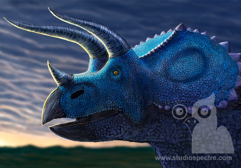 Image of Tracy the Triceratops