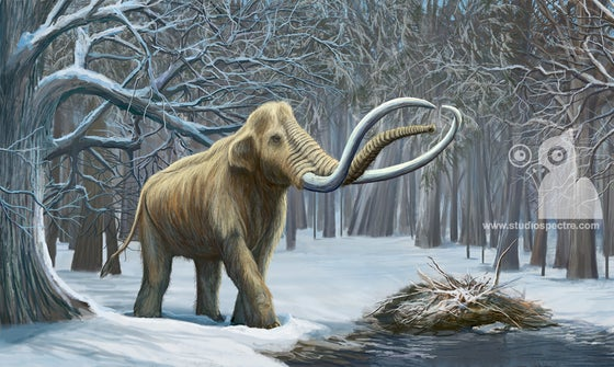 Image of Columbian Mammoth