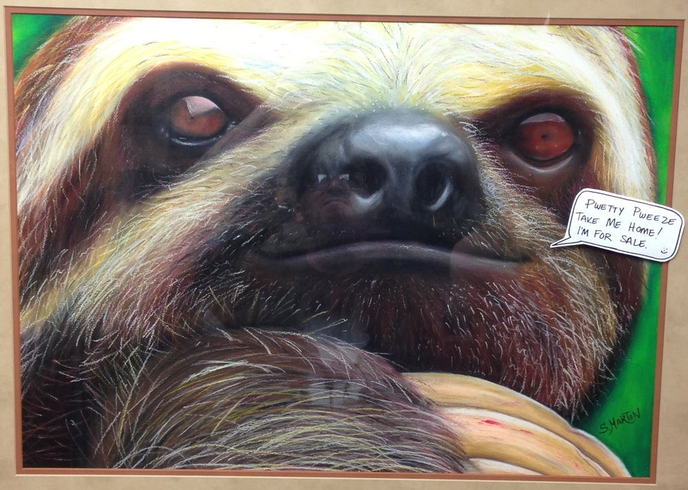 Image of 3 toed Sloth
