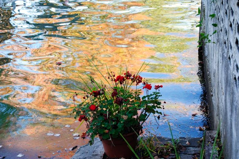 Image of Flowers and Lake Print