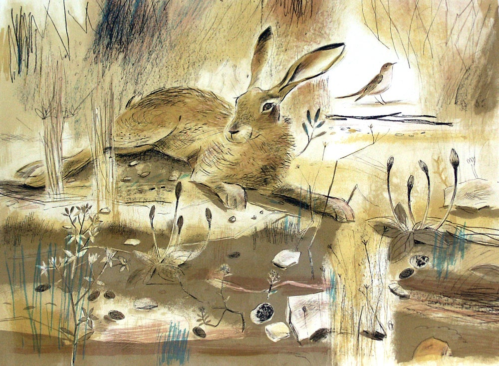 Image of Resting Hare
