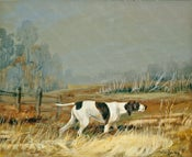 Image of Pointer in the Eden Valley, Westmorland