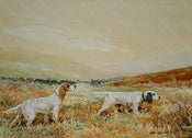 Image of English Setters below Cross Fell