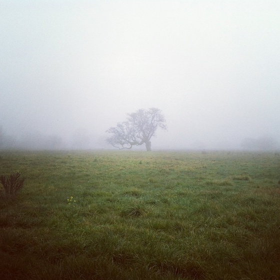 Image of Tree in Fog