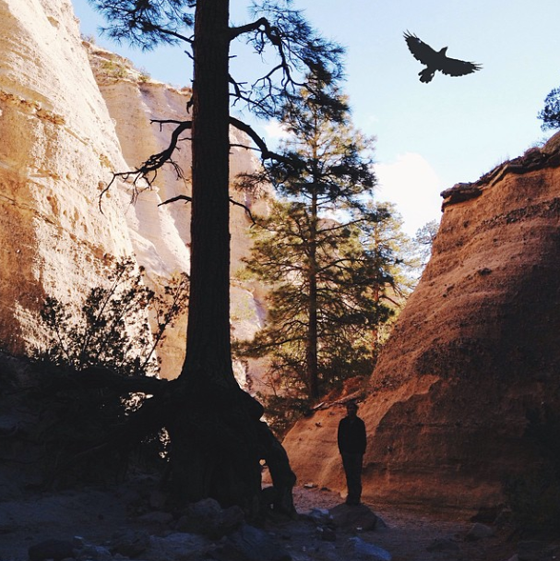 Image of Bird at Tent Rocks