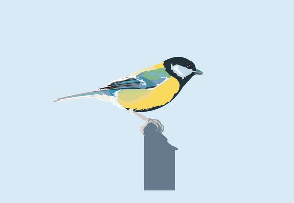 Image of Great Tit Greeting Card