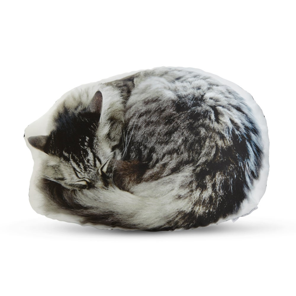 Image of Sleeping Cat