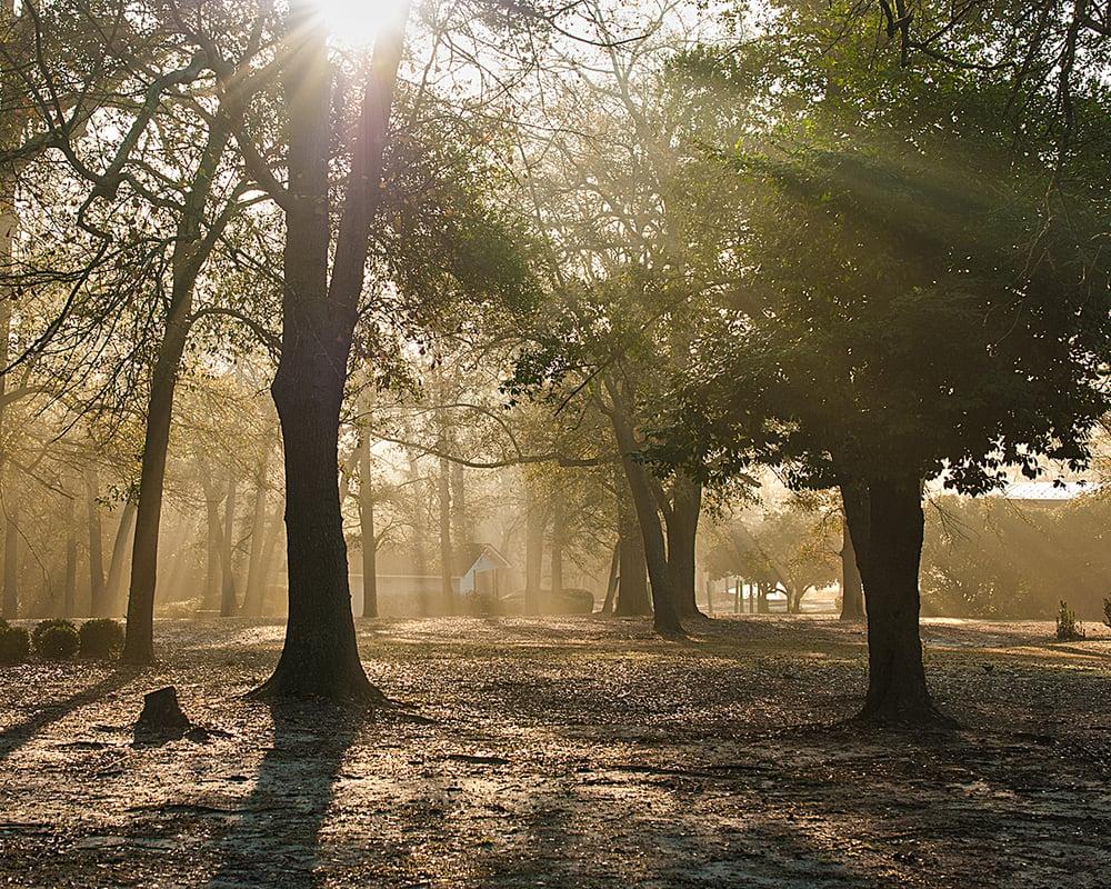 Image of Forest Sunrise