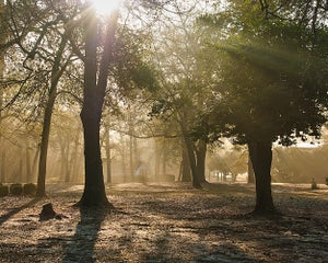 Image of Forest Sunrise