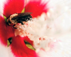 Image of Pollinated