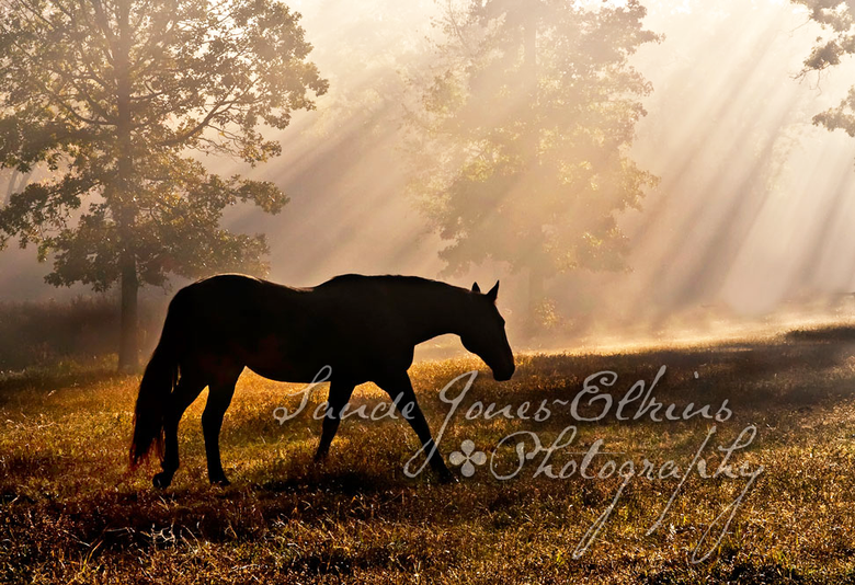 Image of Solitude, Equine Photography