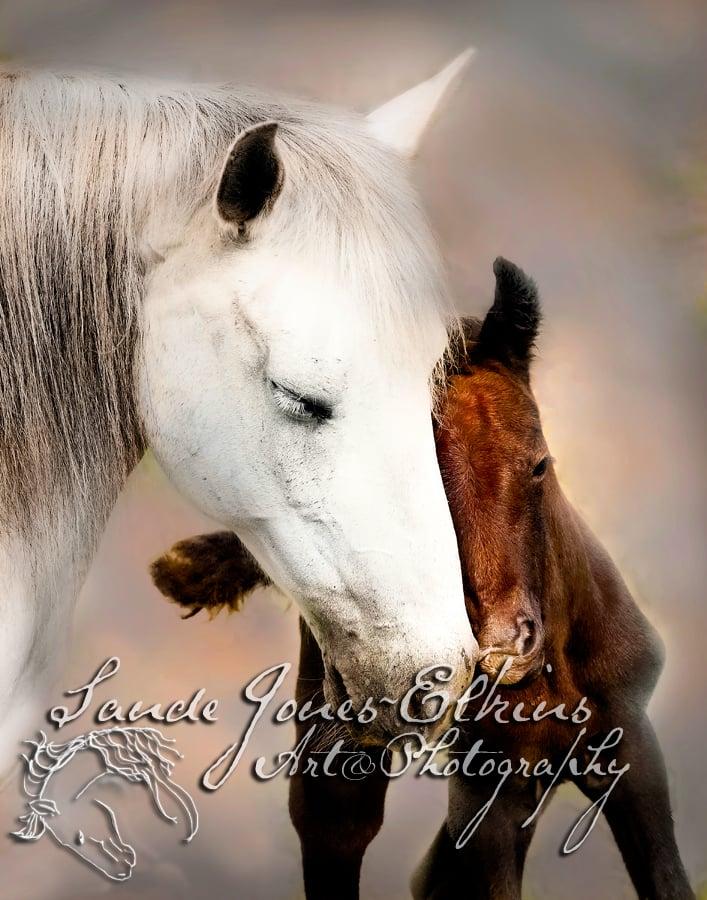 Image of Tenderness, Equine Art