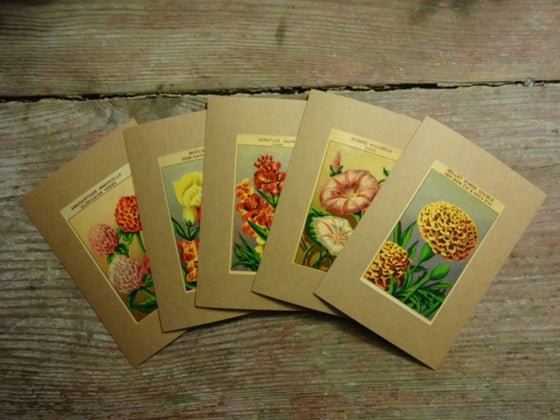 Image of 5 Flower Note Cards