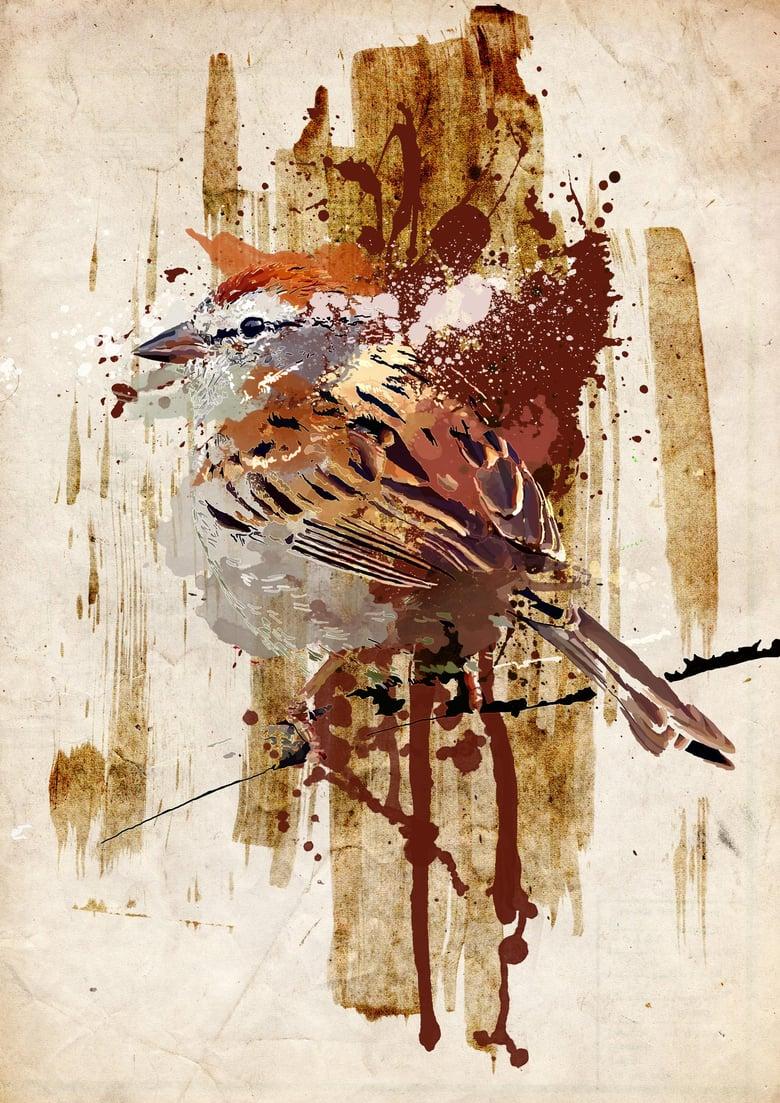 Image of Sparrow - Alu-Dibond | 29,7 x 21 cm