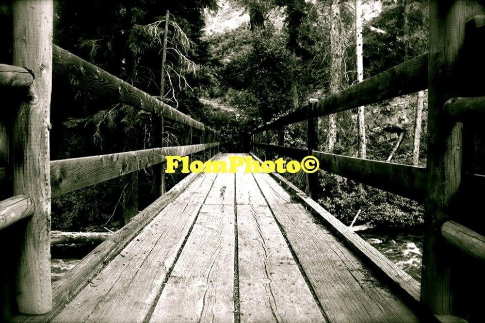 Image of Forest Bridge