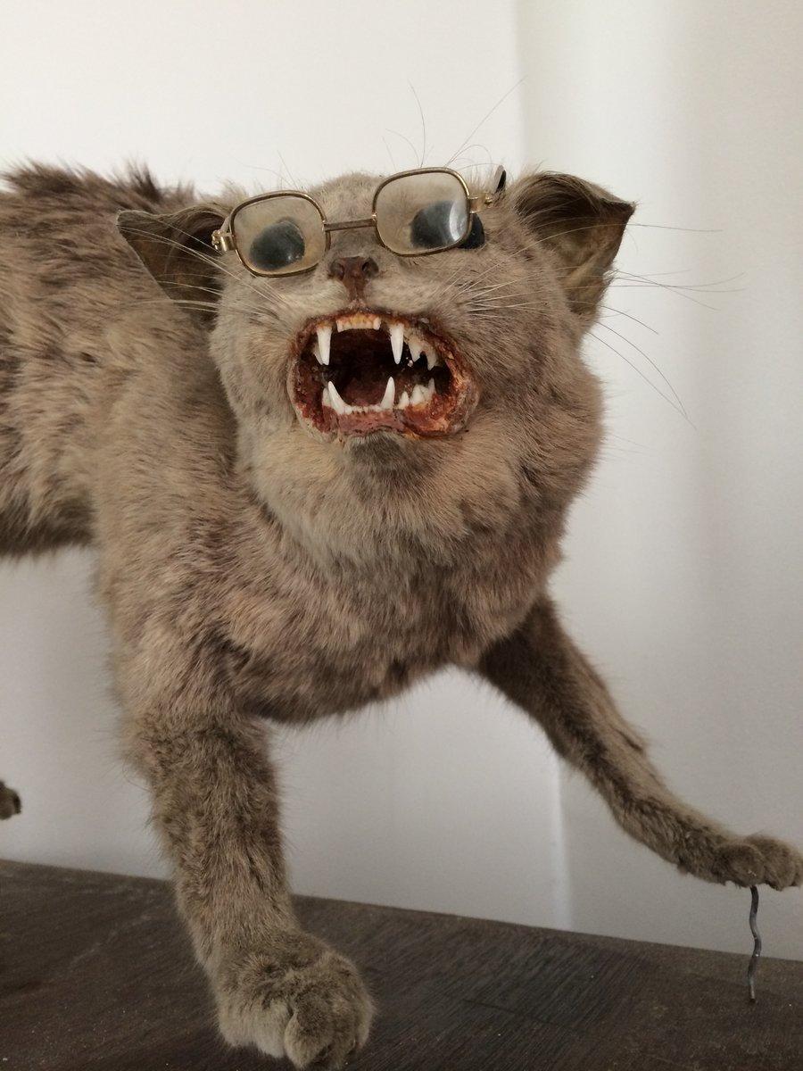 antique taxidermy scaredy cat / eccentric-antiquities