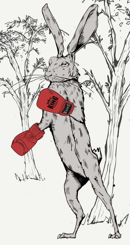 Image of Harey Boxer