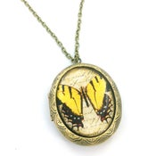 Image of Vintage Style Butterfly Entomology Locket Necklace  YBW