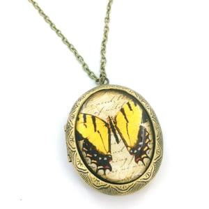 Image of Vintage Style Butterfly Entomology Locket Necklace  YBW