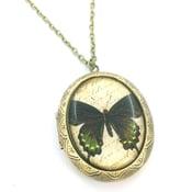 Image of Vintage Style Butterfly Entomology Locket Necklace  BG