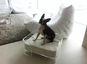 Image of Acrylic Dog Bed UK